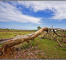 Fallen Tree 1 by haynes99