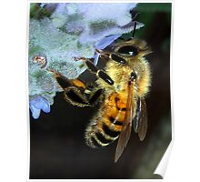 This Bee Fun..... Poster