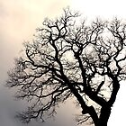 Silhouette of a leafless tree. by cloud7