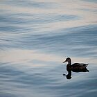 Duck at Sugar Beach by Gary Chapple