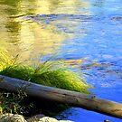 """River's Edge"" by Lynn Bawden"