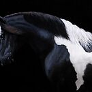 &quot;Gypsy Vanner 4&quot; by hedwardbrooks