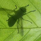 Basking Fly Shadow by LeafLand
