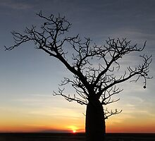Boab Silhouette by Mark Ingram Photography