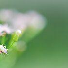 Bug Bokeh by Peyton Duncan