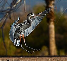 012011 Great Blue Heron by Marvin Collins