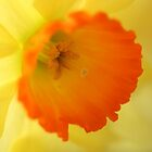 Enchanting Daffodil by Melani
