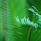 Unfolding Cycad by IngeHG