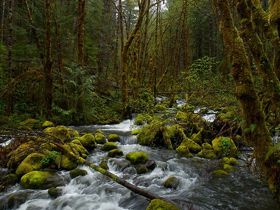 The Breakout by Charles & Patricia   Harkins ~ Picture Oregon