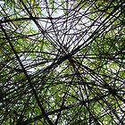 Willow Web by BoggtheDwarf