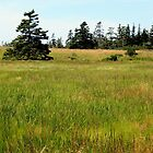 Bog Meadow by RevJoc