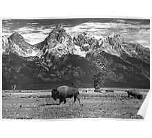Give Me A Home Where The Buffalo Roam Poster