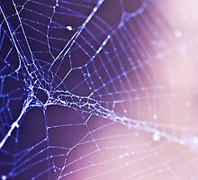 Web Over Water by liftedcorners