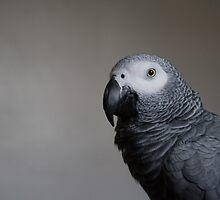 Parrot by cavan michaelides