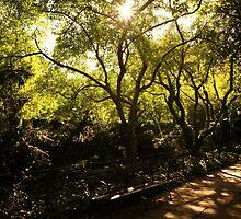Summer Sun - Conservatory Garden - Central Park by Vivienne Gucwa