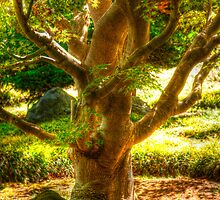 Buddha Tree by Michael Mavor