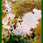 Pool of Life by Elisabeth Dubois