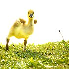 Crazy Little Gosling by vicjauron