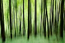Ghost trees in Valserine forest by Patrick Morand