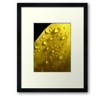 Rainy jewels  Framed Print
