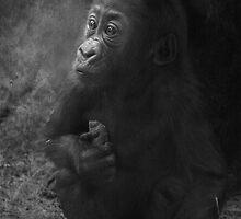 Baby Gorilla Portrait by Tamara  Kaylor
