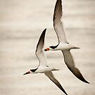 """Aerial Formation"" - black skimmers by John Hartung"