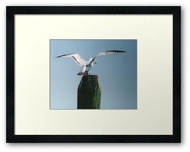 Perching Seagull by Barry Doherty