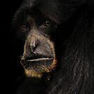 Monkey face by Pascal Lee (LIPF)