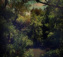 The Swimming Hole by Laurie Search