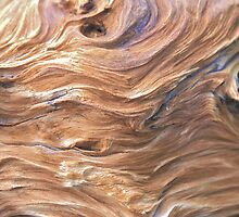 Wood Wrinkles by John Butler