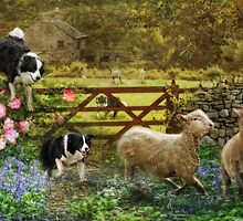 Collecting The Strays by Trudi's Images