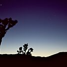 Joshua Tree Sunset by Sean Campanella