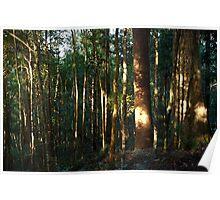 Awakening the Forest Poster