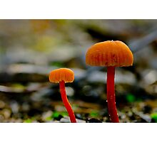 Small and Smaller Fungi Photographic Print