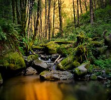 In Search Of Gold  by Charles & Patricia   Harkins ~ Picture Oregon