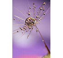 Crystal Lilac Photographic Print