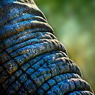 The Elephant&#x27;s Wrinkles by Damienne Bingham