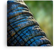 The Elephant's Wrinkles Canvas Print