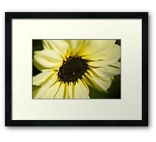 Sunflower Introspection  Framed Print