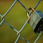 Lock on a Fence by Kevin Stauss