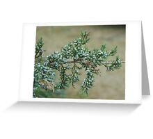 Junniper Berries Greeting Card