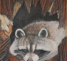 Raccoon by Carrie Bostwick