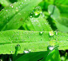 Morning rain drops by Tammy Devoll