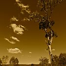 Australia in Sepia by AMP  Al Melville Photography