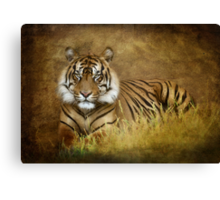 Tiger's Tale Canvas Print