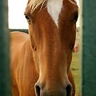 Why the long face? by Emma  Kelly