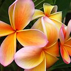Happiness with Frangipani's by Nicki Baker