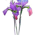 Irises by AniaU