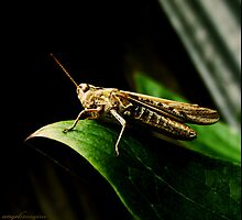 Hopper - Grasshopper by angelimagine
