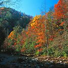 RAVEN FORK,AUTUMN by Chuck Wickham
